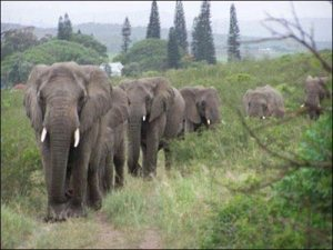ElephantMarch