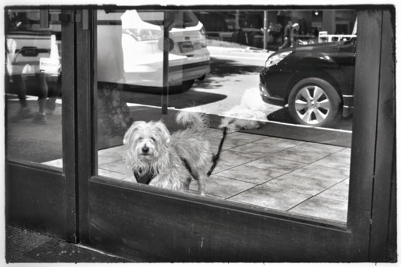 Dog_Reflection